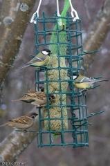 Harakoilta suojattu lintujen rasvaruokinta.
