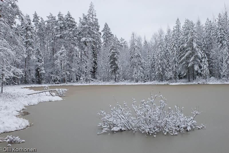 Kurkilampi Halostenvuorilla. Suonenjoki, marraskuu 2005.