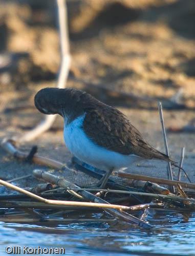 bird photography, nature photography