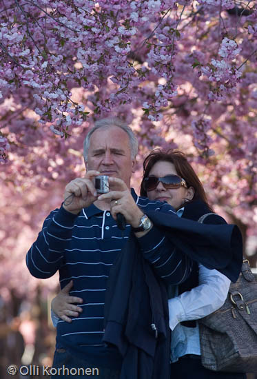 A couple taking a photo under cherry blossoms in bloom.