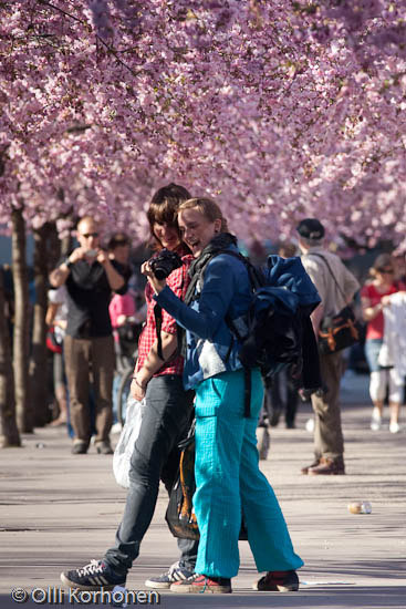 Two girls laughing under cherry blossoms in bloom.