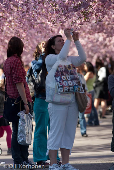 A woman taking a photo under cherry blossoms in bloom.
