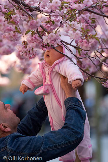 A baby sniffing a cherry blossom in bloom.