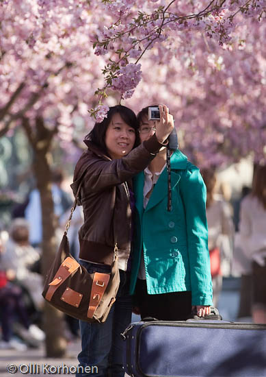 Two girls taking a photo under cherry blossoms in bloom.