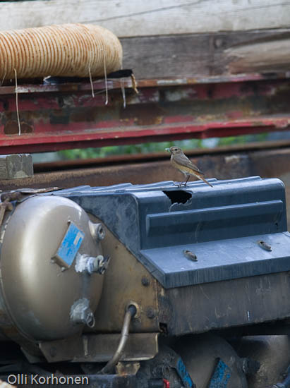 Leppälinnun pesä kuorma-autossa.