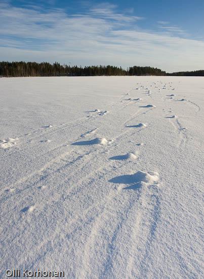 Kuva: Tuulen pyörittämiä lumipalloja järven jäällä.