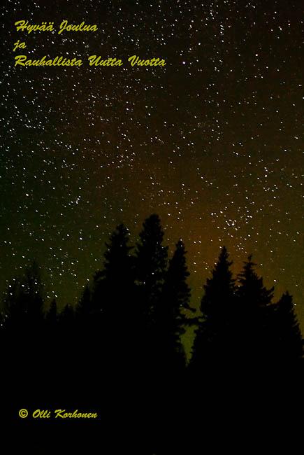 Kuva: Kuusimetsän siluetti tähtitaivasta vasten.