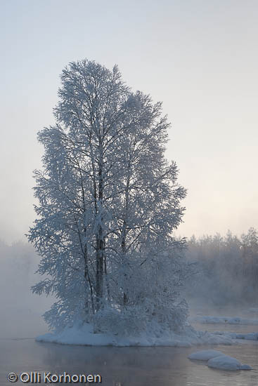 Kuva: Huurteen peittämä puu keskellä talvista virtaa.