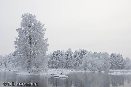 Kuva: Talvinen jokimaisema huurteisine puineen.