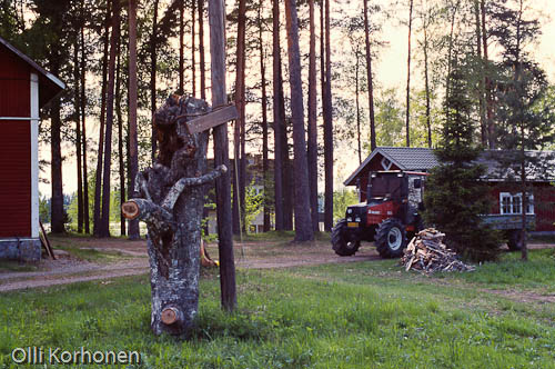Kuva: Viirupöllöjen pystyyn nostetttu pesäpuu maatalon pihassa.