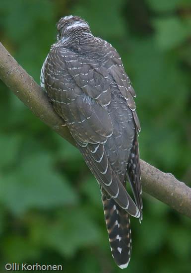 Tunnistatko tämän salaperäisen oudon linnun n:o 7?