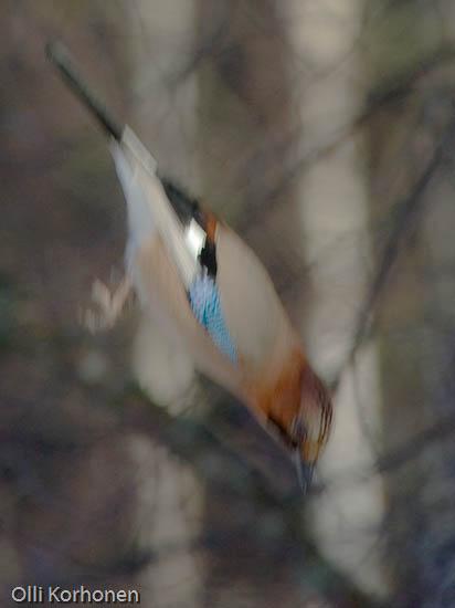 Tunnistatko tämän putoavan oudon linnun n:o 9?