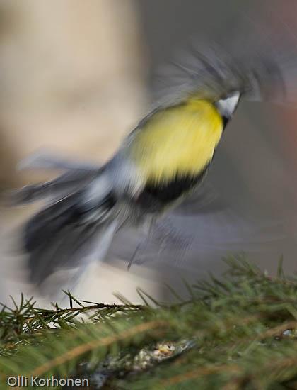 Tunnistatko tämän räpiköivän oudon linnun n:o 5?