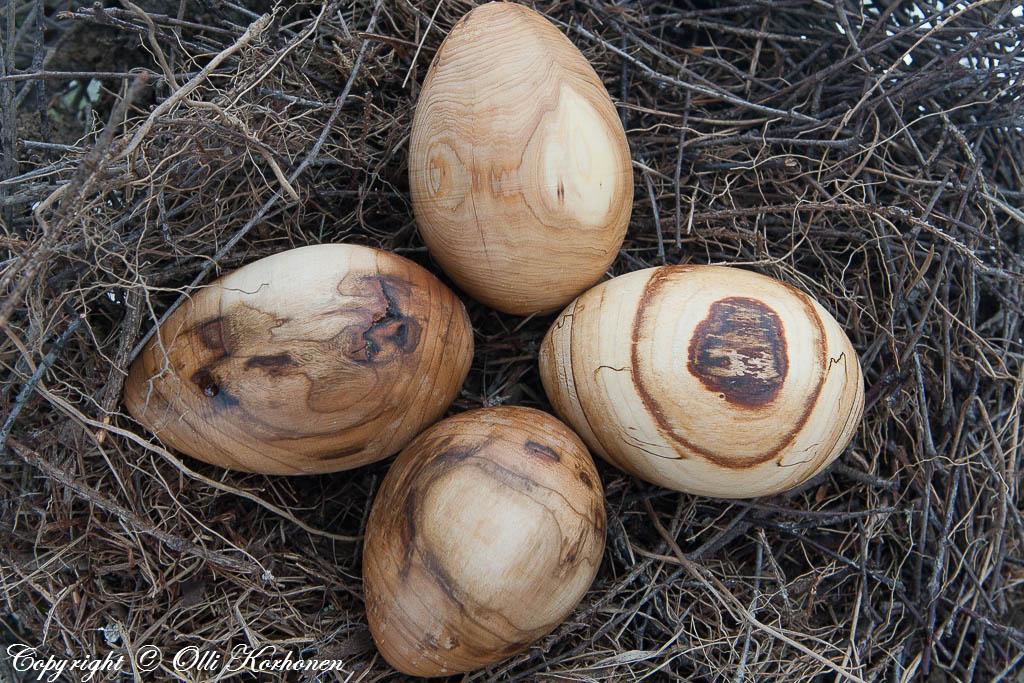 Pääsiäislinnun munia