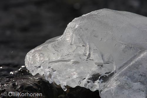 Kuva: Jääkoira.