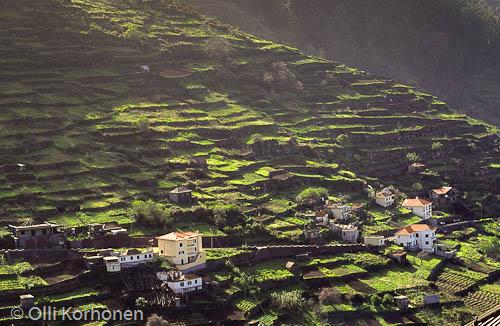 Kuva: Rinneviljelmiä Madeiralla.
