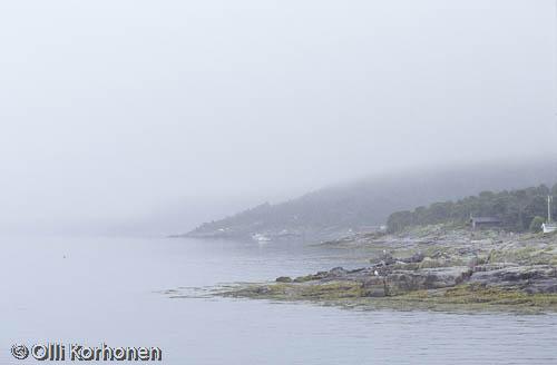 Kuva: Merisumu nousee lokkikalliolle, Pohjois-Norja.