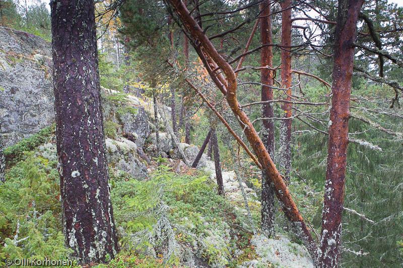 Kuolemanvuori, Suonenjoki