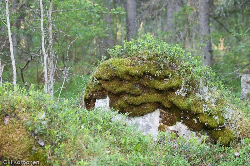 Lilleri Lalleri suomalaisessa metsässä.