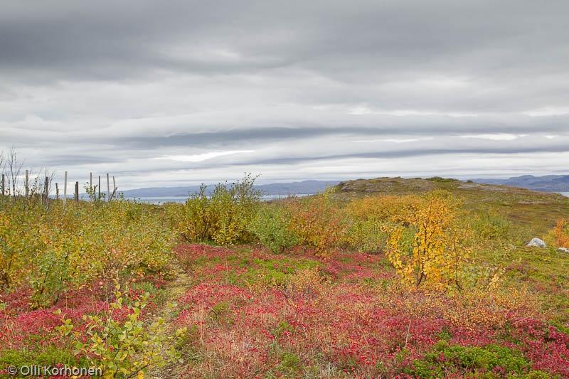 Ruskamaisema Norjan rannikolla välillä Utsjoki-Vuoreija.