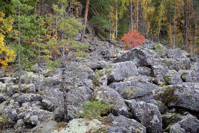 Kalliojyrkänteen alla rantaan rajoittuva lohkarealue, Kallio-Kourujärvi.