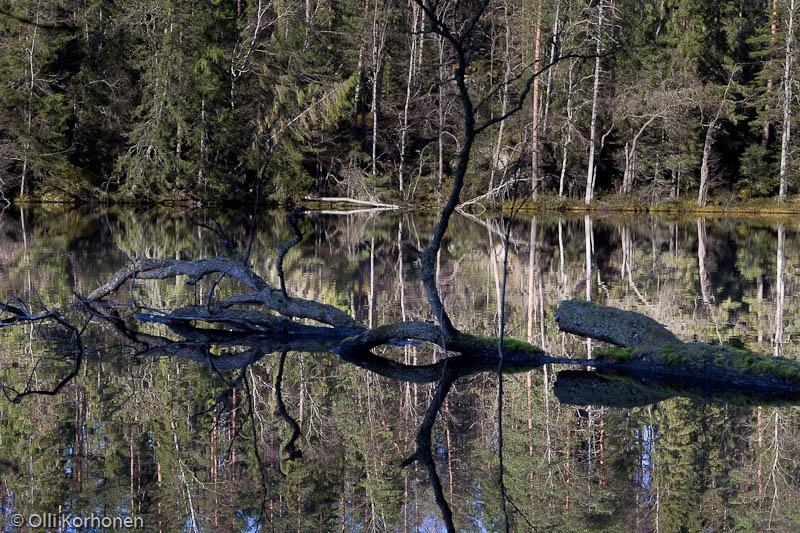 Kylki-Kurikka, Haavikkolehto, Suonenjoki.