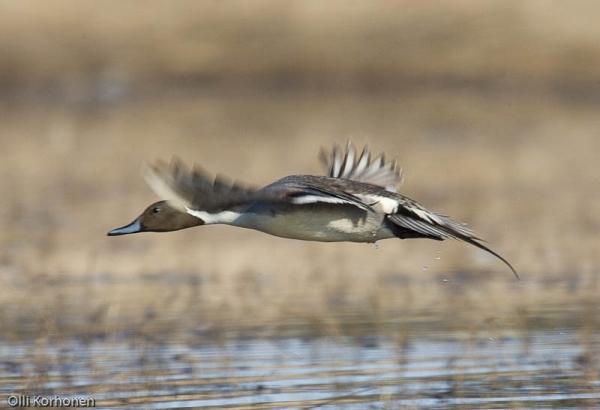 Junnon pellot Rautalammin Rastunsuolla ovat Sisa-Savolasiten lintuharrastajien tarkein seurantakohde. Kosteikko perustettiin 2004.