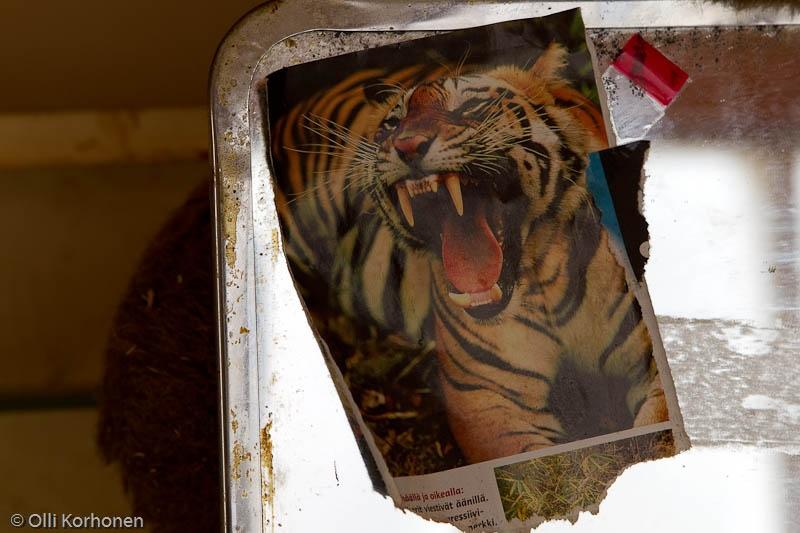 Aution rintamamiestalon peilissä ollut tiikerinkuva.