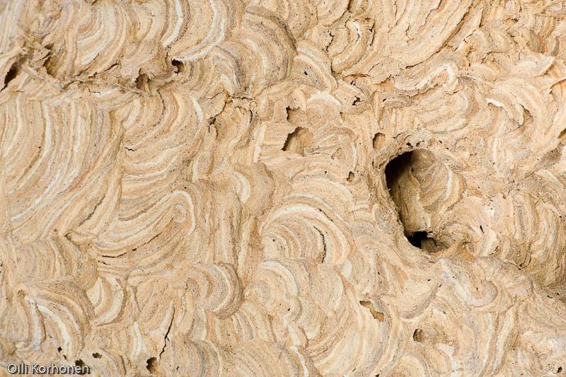 Suuren ampiaispesän pinnan geometrisiä kuvioita.