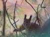Orava tuijottaa ruskaisesta metsästä.