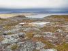 Kallioinen syysmaisema rannikolla, Kirkkoniemi, Norja.