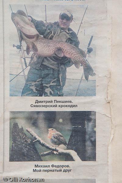 Jättihauki, Petroskoi 2011
