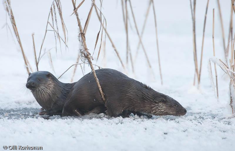Ahdasta avannolla, Vuoden luontokuva 2011-ehdokas