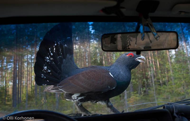 Rajoitettu näkyvyys, Vuoden luontokuva 2011-ehdokas
