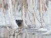 Kurkistus, Vuoden luontokuva 2011-ehdokas