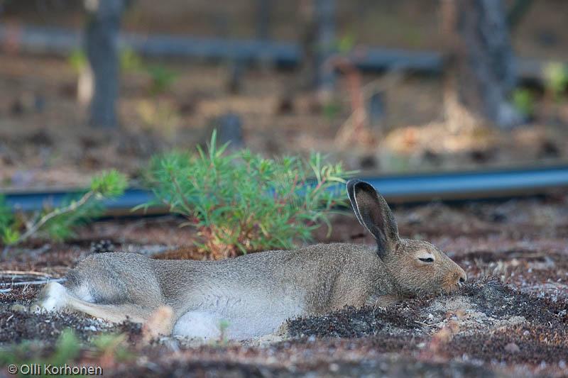 Väsyttää vietävästi, Vuoden luontokuva 2011-ehdokas