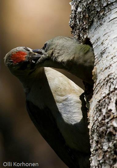 bird potography