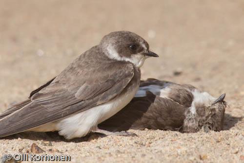 Can a bird feel sorrow? photo