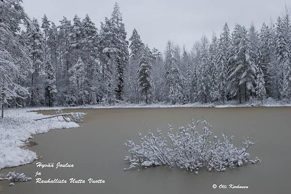 Kuva: Jäätyvä metsälampi.
