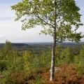Syysmaisema, Kirkkovuori, Suonenjoki
