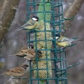 Harakkavapaa lintujen rasvaruokinta-automaatti