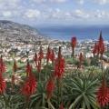 Pico dos Barcelos, Funchal, Madeira