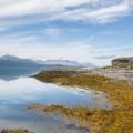 Sinisen vuonon rannalla, Norja.