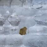 Kauniita jäänalaisia jäämuodostelmia