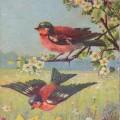 peippo,vanha postikortti