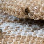 Pesään kuolleita ampiaisia kennostossa