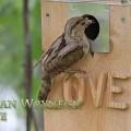 Käenpiika romanntisessa linnunpöntössä