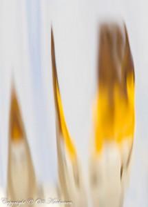 Liekehtivät joutsenet - Kolmen laulujoutsenen heijasteet vedenpinnalla