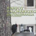 palokärki,hautausmaalla,hauska lintuvideo